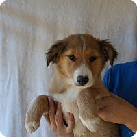 Adopt A Pet :: Addi - Oviedo, FL