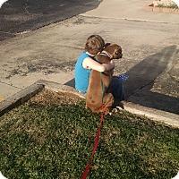 Adopt A Pet :: Cali - Shawnee, OK