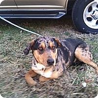 Adopt A Pet :: Jewell - Providence, RI