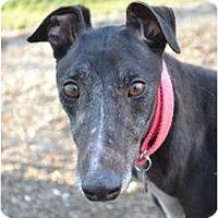 Adopt A Pet :: Landra (RJ's Lander) - Chagrin Falls, OH