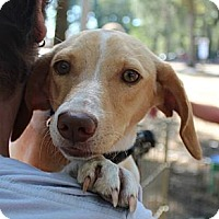 Adopt A Pet :: Peaches - Somers, CT