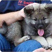 Adopt A Pet :: Jax - Los Altos, CA