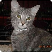 Adopt A Pet :: Ellery - Riverside, RI