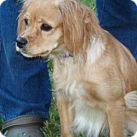 Adopt A Pet :: Maise - Sugarland, TX