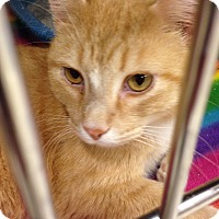 Adopt A Pet :: Max - Muncie, IN