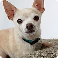 Adopt A Pet :: Pip - Scottsdale, AZ