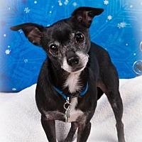 Adopt A Pet :: Marley Rhoades - Elizabethtown, PA