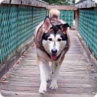 Adopt A Pet :: Zeva - Clearwater, FL