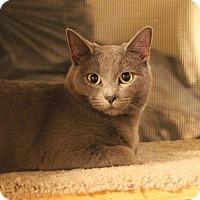 Adopt A Pet :: Misi - Carlisle, PA