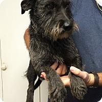 Adopt A Pet :: SHERLOCK - Metairie, LA