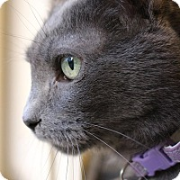 Adopt A Pet :: Smokey - Colorado Springs, CO