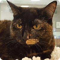 Adopt A Pet :: Spots - Grayslake, IL