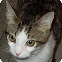 Adopt A Pet :: Magnum - Jacksonville, NC