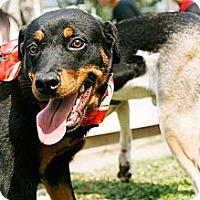 Adopt A Pet :: DaDa - Temple City, CA