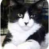Adopt A Pet :: Jezebelle - Lake Ronkonkoma, NY