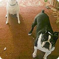 Adopt A Pet :: 2 boys looking for home togeth - Sacramento, CA