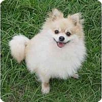 Adopt A Pet :: Mandy - Houston, TX