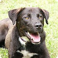 Adopt A Pet :: Mason - Mocksville, NC