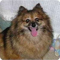 Adopt A Pet :: Mya - Chesapeake, VA