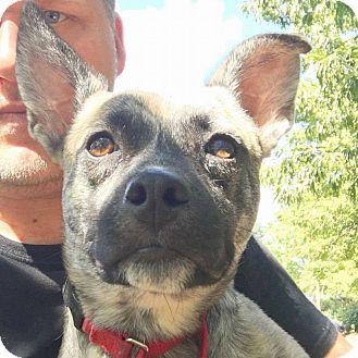 Cattle Dog Mix Dog for adoption in CUMMING, Georgia - Sarah