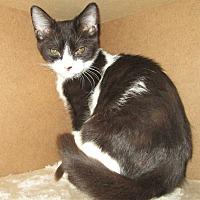 Adopt A Pet :: ZZ - San Bernardino, CA