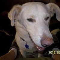 Adopt A Pet :: Timmy - Wedowee, AL