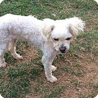 Adopt A Pet :: KC - San Antonio, TX