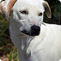 Adopt A Pet :: Anza - Mountain Center, CA