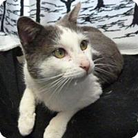 Adopt A Pet :: Smokey - South Haven, MI