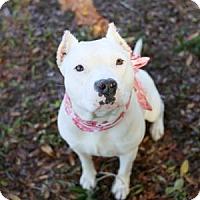 Adopt A Pet :: Sassy - Lakeland, FL
