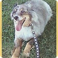 Adopt A Pet :: Lynx - Scottsdale, AZ