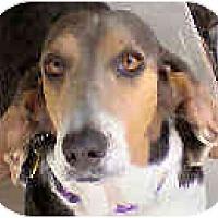 Adopt A Pet :: Marina - Phoenix, AZ