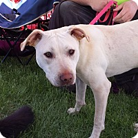 Adopt A Pet :: Jessie - Ortonville, MI