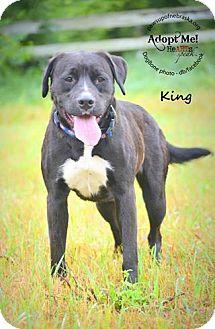 Labrador Retriever/Boxer Mix Dog for adoption in Wymore, Nebraska - King