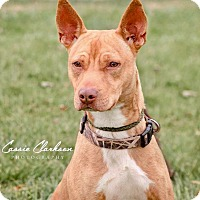 Adopt A Pet :: Rudy - ADOPTED! - Zanesville, OH