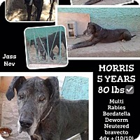 Adopt A Pet :: Morris - Denver, CO