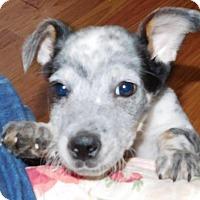 Adopt A Pet :: Jackson - Von Ormy, TX