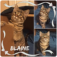 Adopt A Pet :: Blaine - Jeffersonville, IN