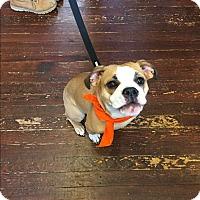 Adopt A Pet :: Daisy - Baltimore, MD