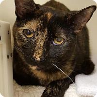 Adopt A Pet :: Wren - Salisbury, MA