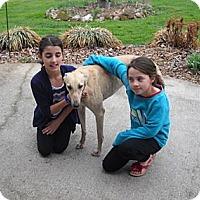 Adopt A Pet :: LarryMadeUsLaugh - Knoxville, TN