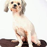 Adopt A Pet :: Lucky - Beaumont, TX
