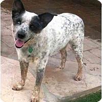 Adopt A Pet :: Pogi - Phoenix, AZ