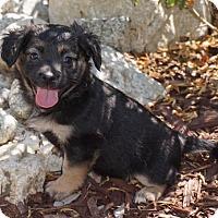 Adopt A Pet :: Poppy - La Habra Heights, CA