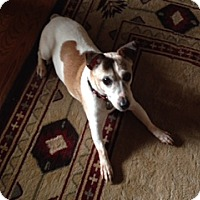 Adopt A Pet :: Casey - Richmond, VA