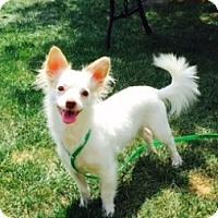 Adopt A Pet :: O'Dell - Beavercreek, OH
