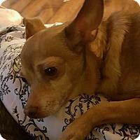 Adopt A Pet :: CHAMP - Cranston, RI