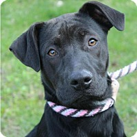 Adopt A Pet :: KAYSHA:Low fees/Altered - Red Bluff, CA