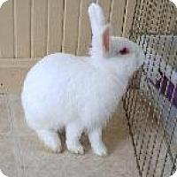 Adopt A Pet :: Sumatra - Woburn, MA