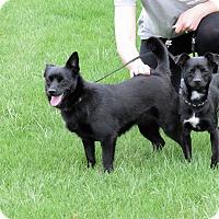 Adopt A Pet :: Ellie - Meridian, ID